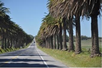 palmiersroute